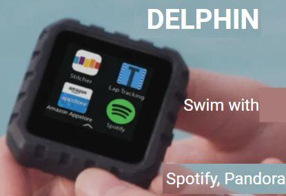 Delphin pic.jpg