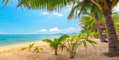 sand_sea_sky_palm_trees_nature_tropical_landscape_beautiful_5000x2532.jpg